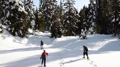 Snowshoe Adventuring in the Sierra