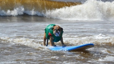 Dogs Will Surf (and Help Other Dogs in Need)