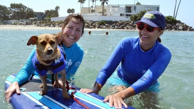 Wet Woofers: Surf Dog Lessons Begin