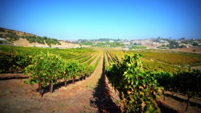 Sunshiny Sips at the Temecula Valley Barrel Tasting Event
