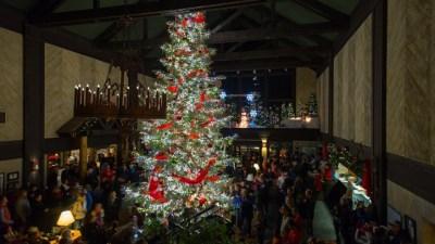 Lodge Tree Tradition: Tenaya's Sparkly Fir