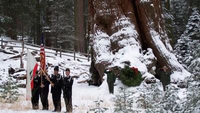 Trek to the Tree: Sequoia History + Holidays