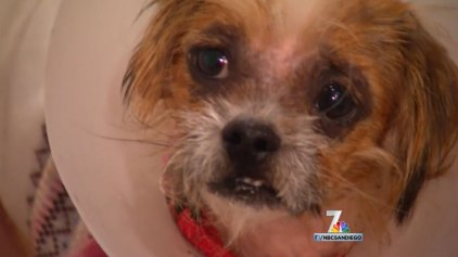 Dog Found in Dumpster Gets Second Chance