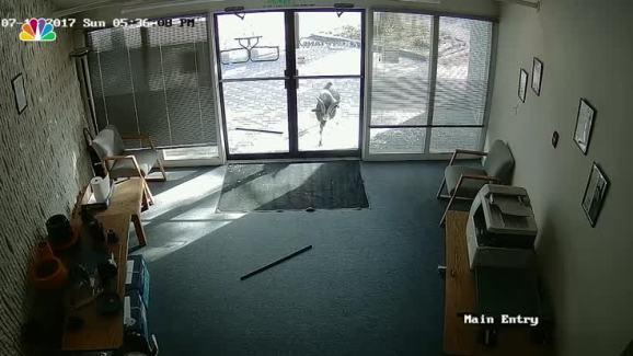 Goat Rams Through Glass Door Of Colo Business Nbc 7 San Diego