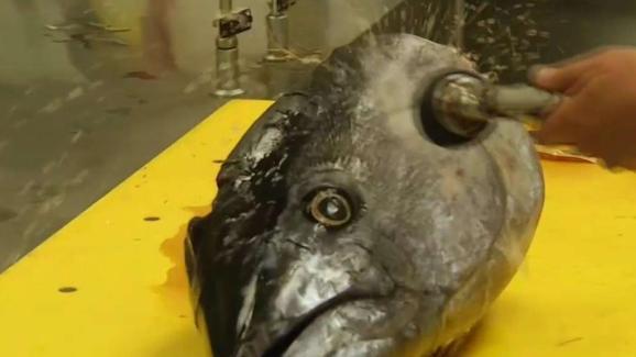 Warm Water a Boon for San Diego\'s Sports Fishing - NBC 7 San Diego