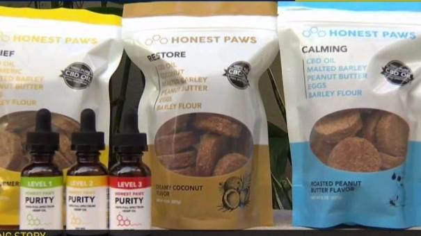 CBD Oil Used for Physical Pain in Pets