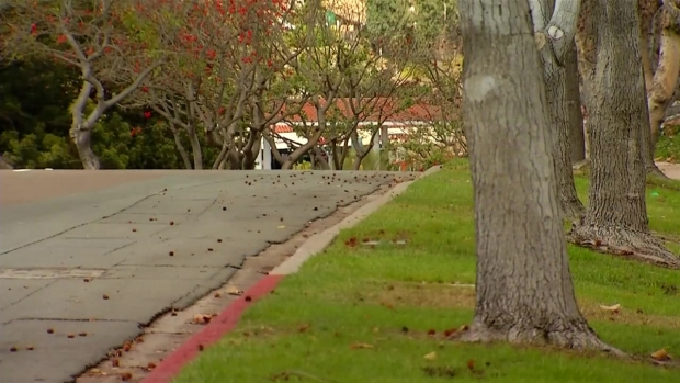 "[DGO] Serra Student Caught With Gun in ""Close Call"""