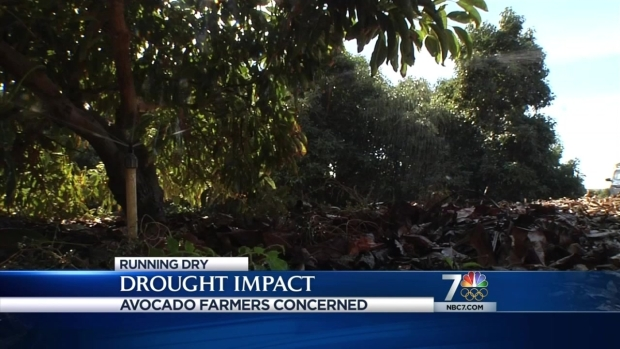 [DGO]Drought Impacts SD Avocado Farms