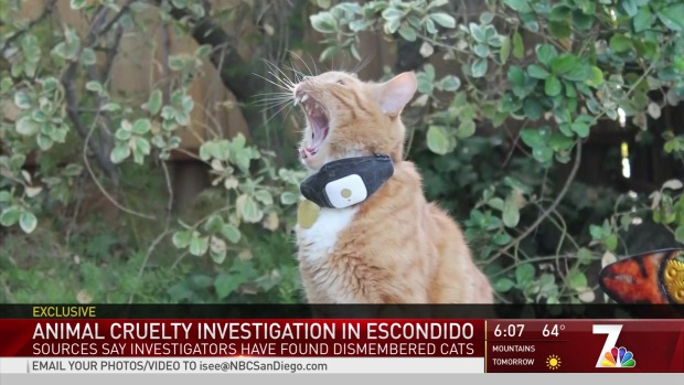 [DGO] Animal Cruelty Investigation in Escondido
