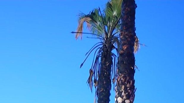 [DGO] San Diego Fire Rescue Investigates Arson Series