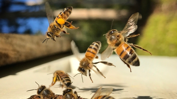 The Art of Backyard Beekeeping in San Diego