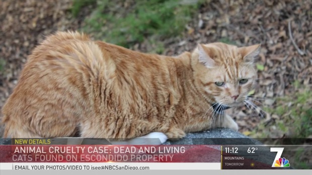 [DGO] Cat Carcasses Found In Escondido