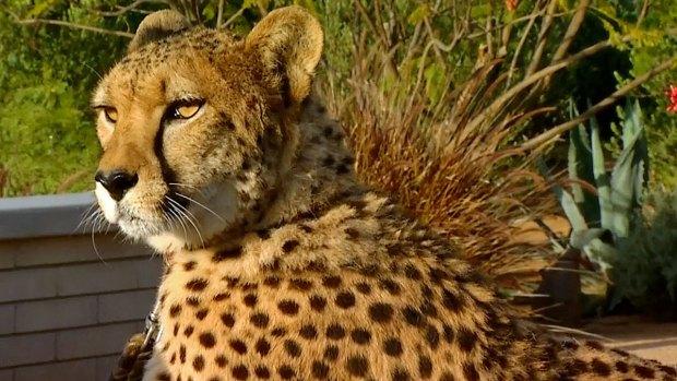 [DGO] Cheetah Conservation Fund