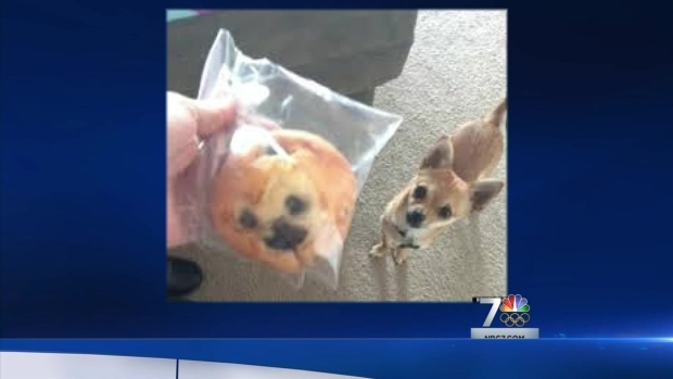 [DGO] Muffin Resembles Teen's Chihuahua?