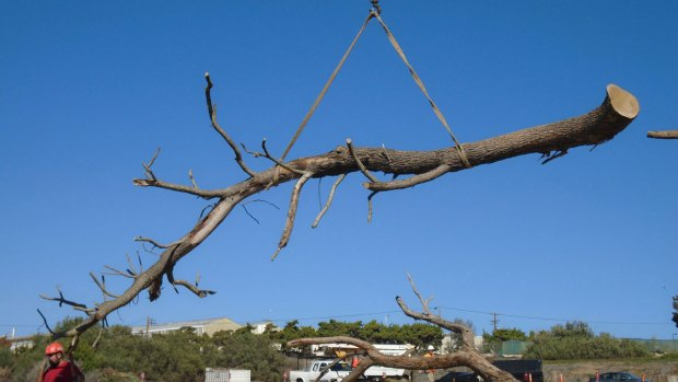 Rare Trees Killed in Drought to Be Reused by San Diego Botanic Garden