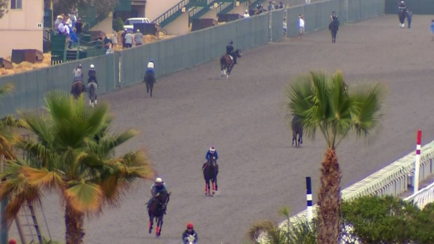 Del Mar Turf Races Suspended for Maintenance