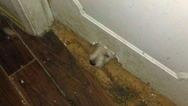 Allegations of Abuse Inside La Jolla Home: Images