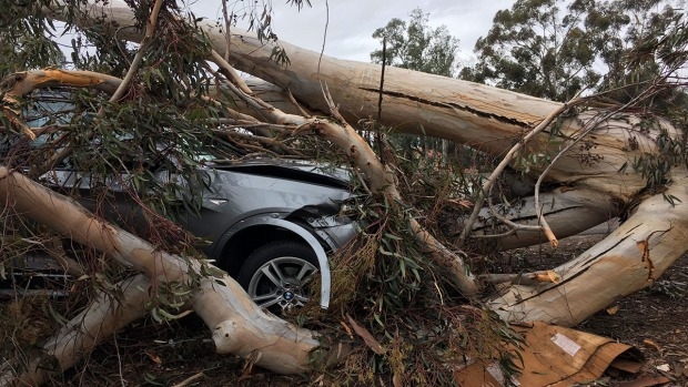 [DGO] City Crews Preparing for Possible Flood Damage and Strong Winds with Upcoming Storm