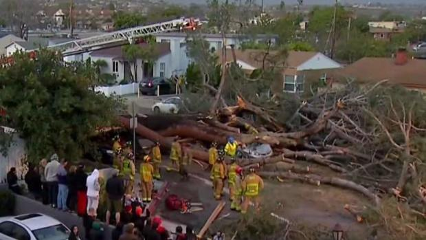 [DGO] Family of Woman Killed by Falling Tree in PB Settles with City
