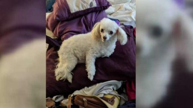 [DGO] Fast-Moving House Fire Kills Therapy Dog