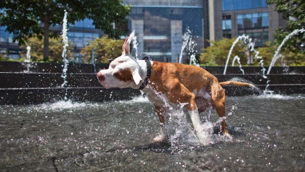 [NATL-MIA] Tips for Keeping Your Pet Safe in the Summer Heat