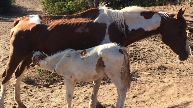 Images: Rescued Horses Before After Photos