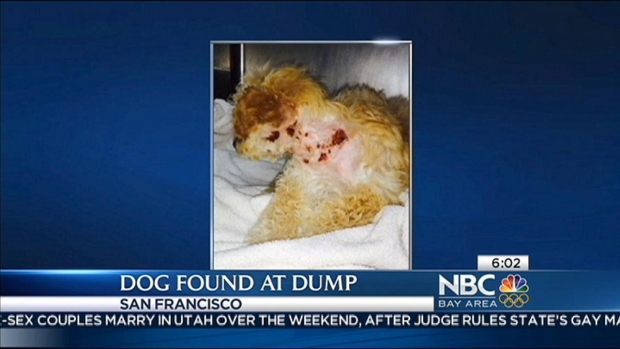 "[BAY] ""Thrown Away"" Poodle Puppy Found in Recycling Center"