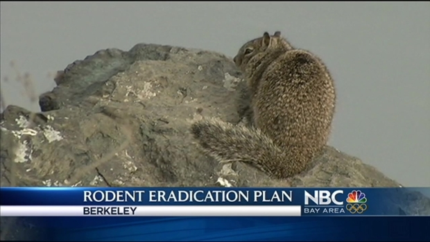 [BAY] Popular Bay Area Park Looks to Eradicate Rodents