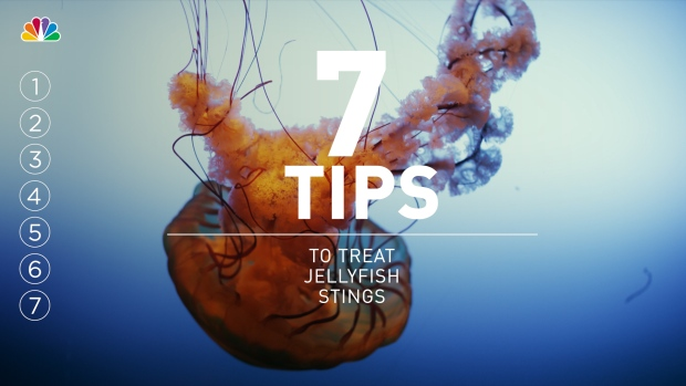 [NATL] 7 Tips for Treating Jellyfish Stings