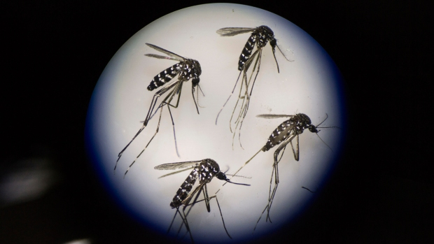 South Park Resident Being Treated for Mosquito-Borne Illness