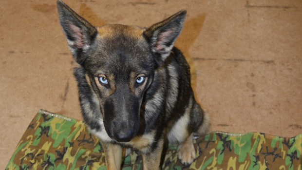[DGO] Navy Finds Puppy Lost for 5 Weeks