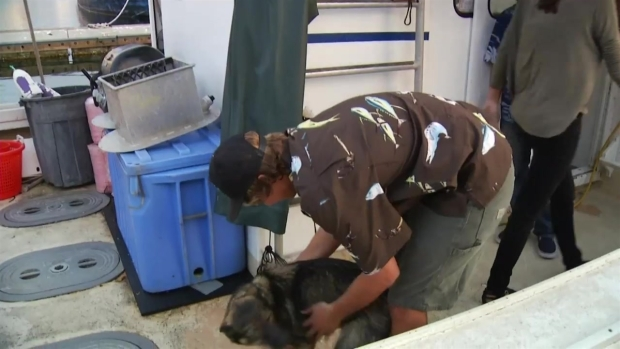 [DGO] Luna, the Lost Dog at Sea, Reunites With Owner
