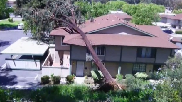 Images: High Winds Sweep San Diego County, April 2014