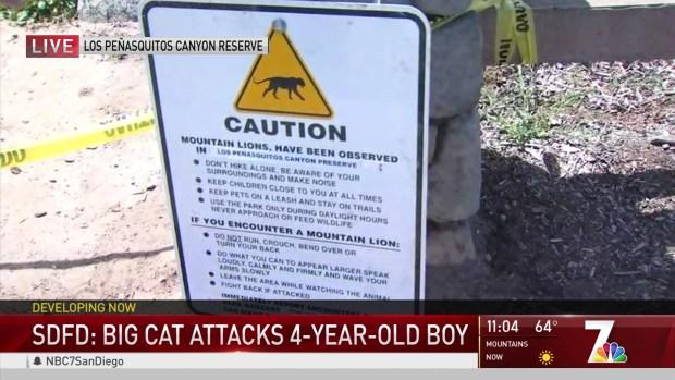 Officials Order DNA Tests in Big Cat Attack