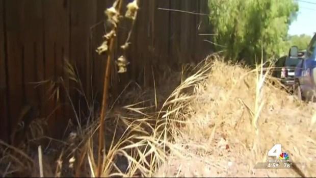 [LA] Search for Venomous Albino Cobra Continues