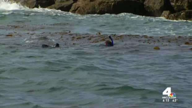 [LA] Students Test Kelp for Fukushima Radiation