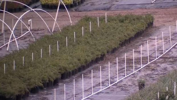 Oceanside Farmers Get Ready for Rain
