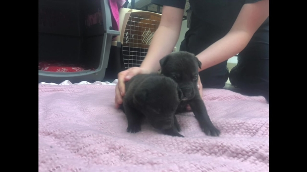 [DGO] 9 Puppies Found Inside Old Dog Food Bag in Kit Carson Park