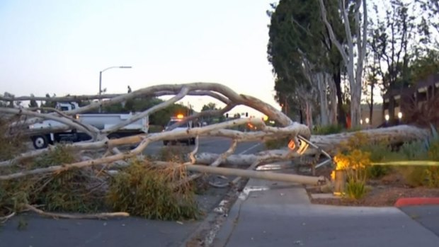 [DGO] Winds Knock Down Poway Tree