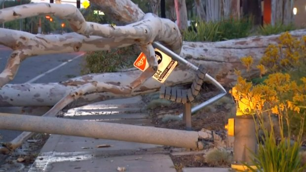 [DGO] Crews Clear Toppled Tree in Poway