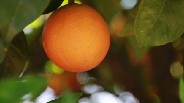 [DGO] Your Corner: Fighting Hunger One Orange at a Time