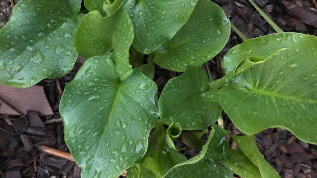 [G] January Brings Rain, Frost, Frigid Temps to San Diego