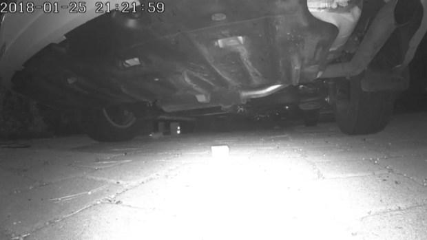 Rats inside car engines
