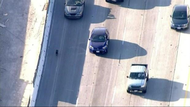 [LA] Dog Saved by Good Samaritans on 710 Freeway