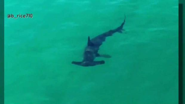 Shark Sighting Forces Oceanside Beach Closure