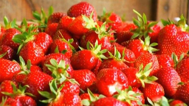 [DGO] Future of Carlsbad Strawberry Fields Worries Locals