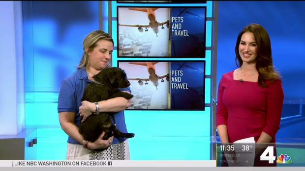 [NATL-DC] Tips for Traveling on a Plane With Your Pet