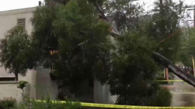 Tree Falls on Coronado Home as Gusts Hit County