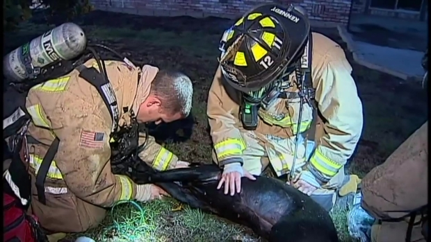 [DGO] Firefighters Revive Dog in Vista House Fire