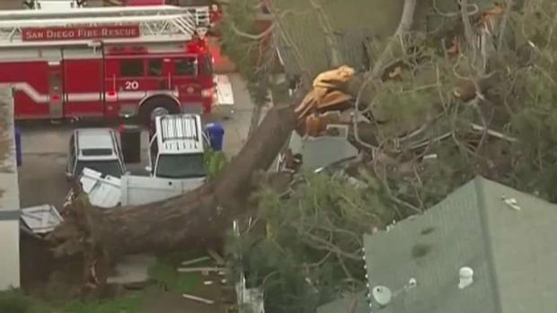 Visiting Couple Killed as Tree Falls on Rented Home